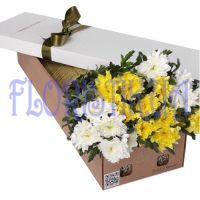 Box chrysanthemums